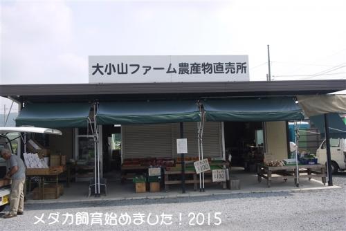P1110458.jpg