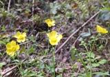 足下、黄色の花
