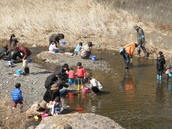 水生生物観察
