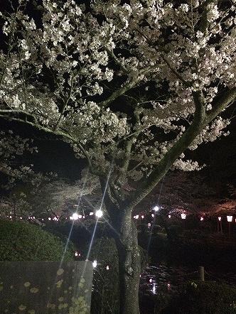 桜祭り茂原公園2015その3