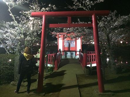 桜祭り茂原公園2015その4