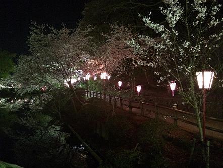 桜祭り茂原公園2015その7