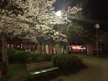 桜祭り茂原公園2015その9