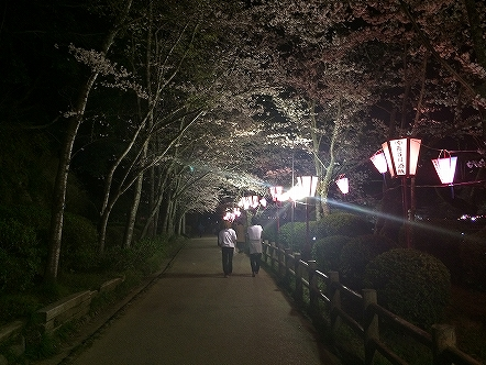 桜祭り茂原公園2015その10
