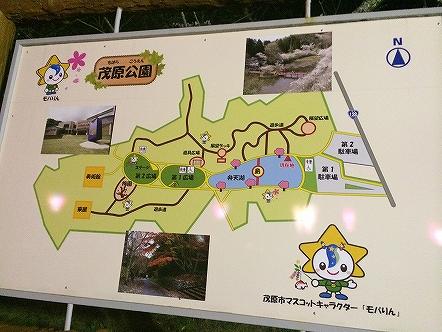 桜祭り茂原公園2015その11