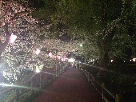 桜祭り茂原公園2015その12