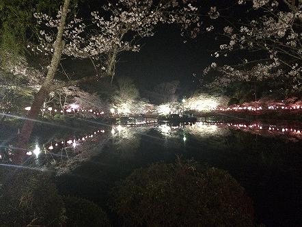 桜祭り茂原公園2015その13