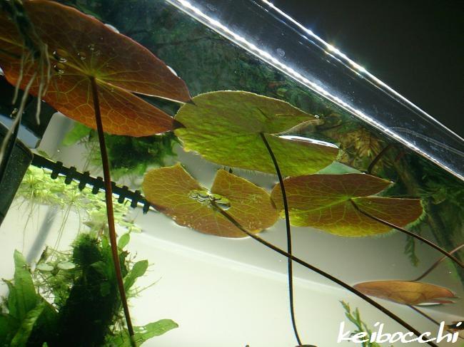 suirennzousan_20150211_06.jpg