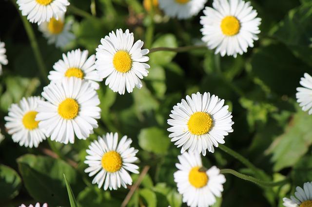 flowers-113178_640[1]