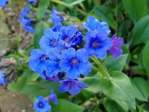 blue3[1]