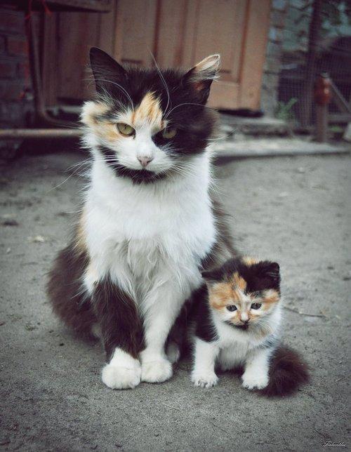 子持ちのやくざ猫