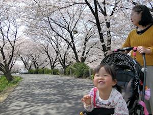曽我川の桜の下