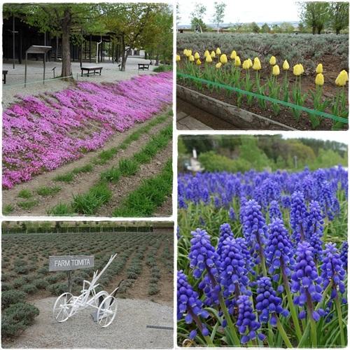 北海道旅行(富良野)ファーム富田 2015・5月10日