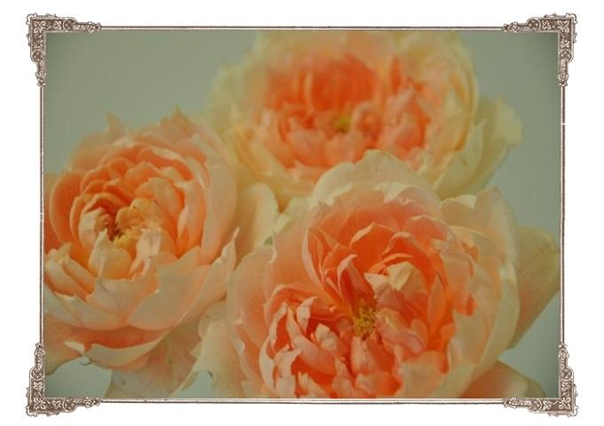 切り花・バラ 2015・6月3日 (2)