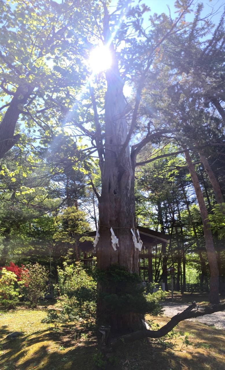 20150614御神木