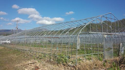 第二農場 (2)