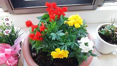 花寄せ植え