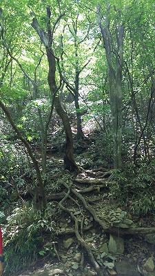 37井原山