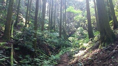 111井原山