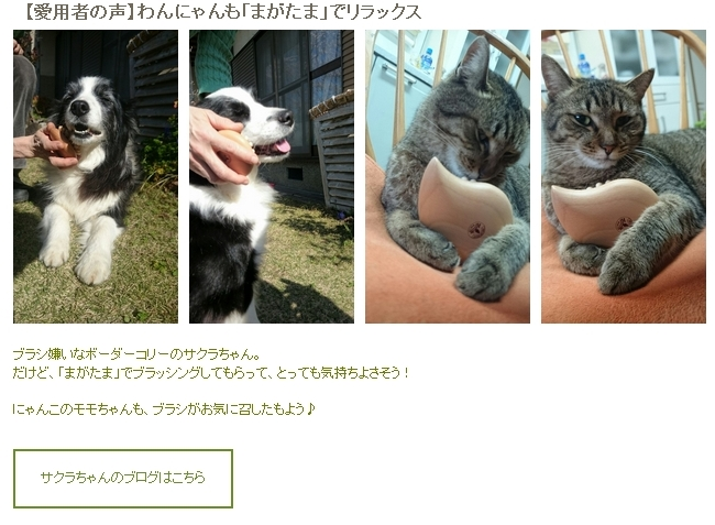 ホームページで紹介してくれましたヽ(・∀・)ノ