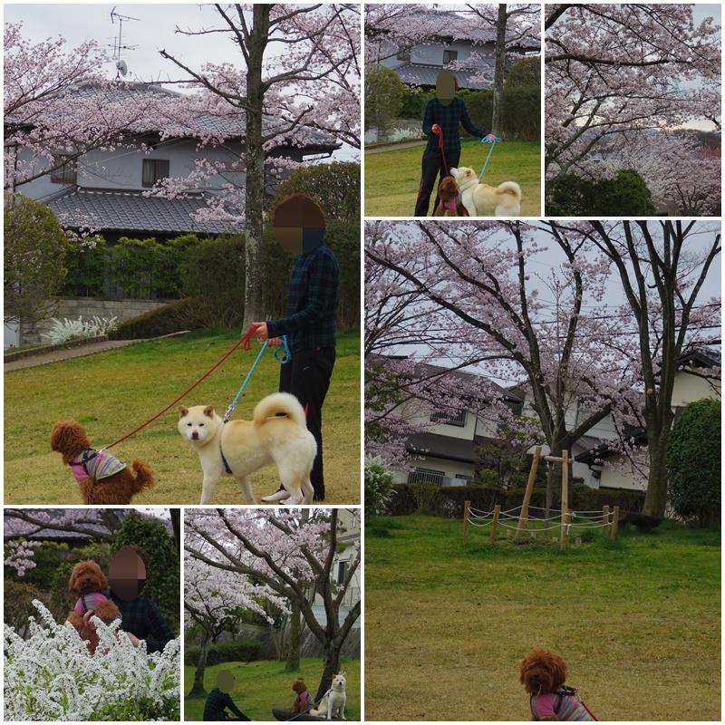 4月3日 桜を見に行ったよぉ~♫