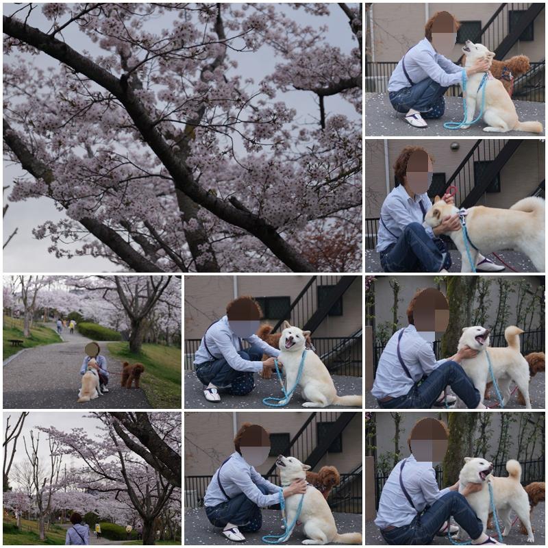 4月4日 桜を見に行ったよぉ~♫