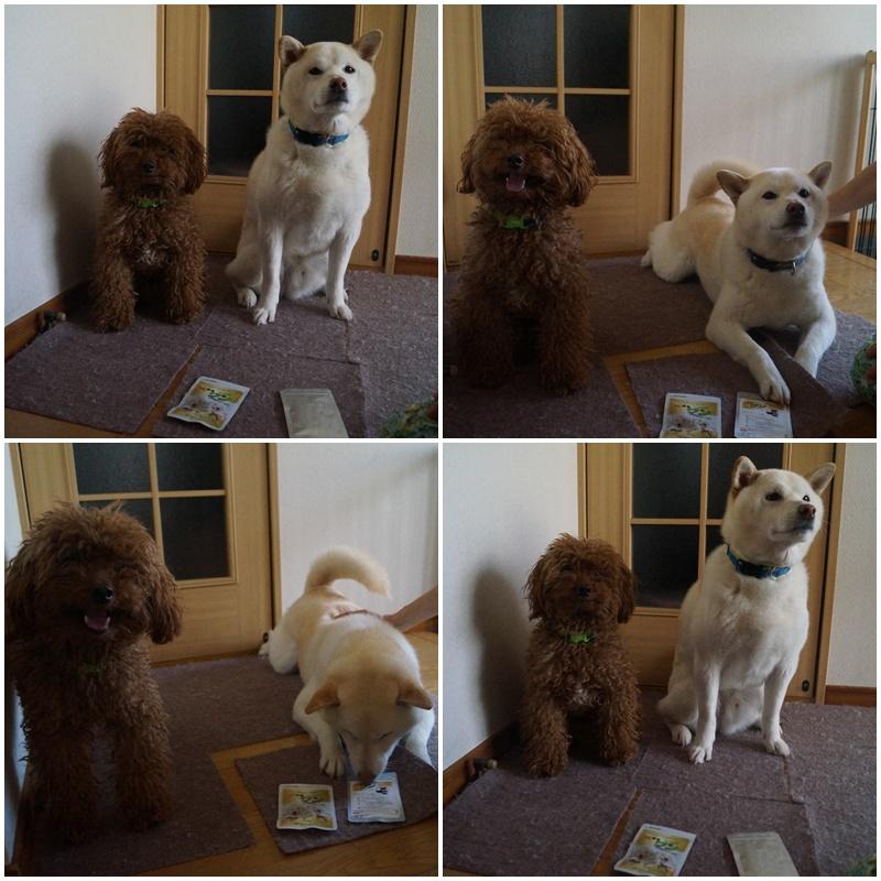 犬健康ワン
