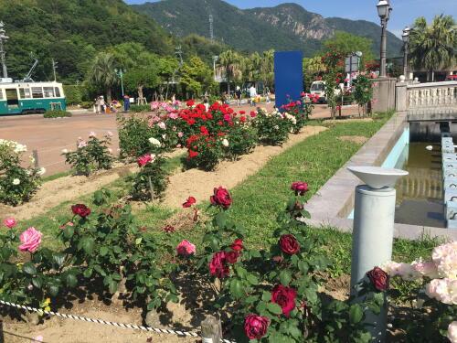 12バラがいっぱい