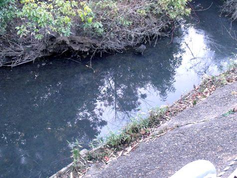 画像ー271神戸震災と1月29日の朝・家の周辺 039-2