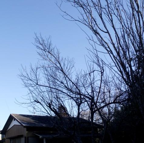 画像ー271神戸震災と1月29日の朝・家の周辺 041-2
