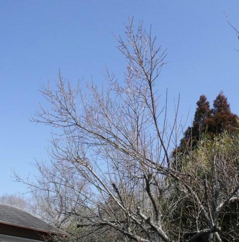 画像ー277 県民の森 005-2