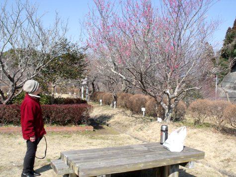 画像ー277 県民の森 016-2