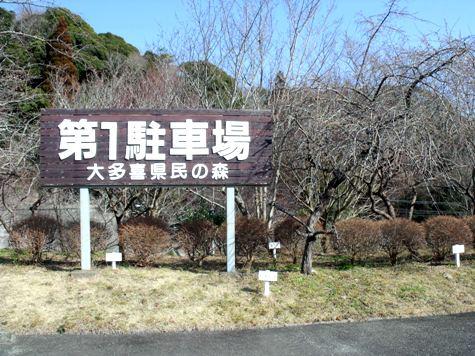 画像ー277 県民の森 042-2