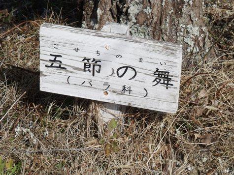 画像ー277 県民の森 031-2