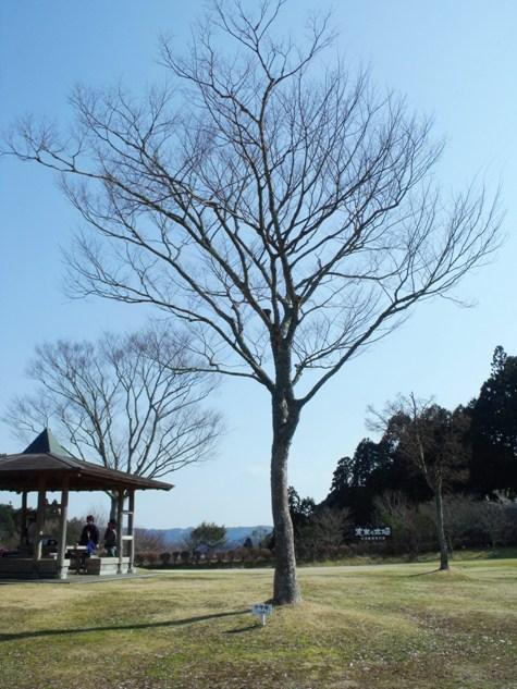 画像ー277 県民の森 064-2