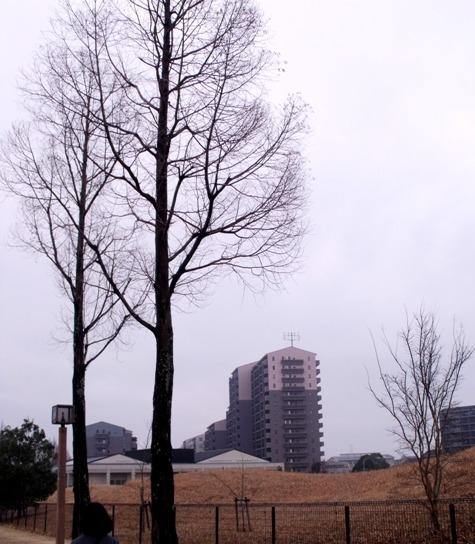 画像ー281 昭和の杜 051-2