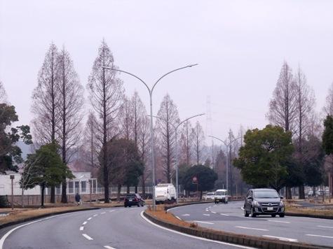 画像ー281 昭和の杜 049-2