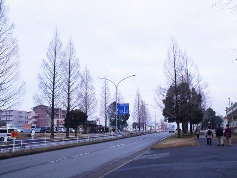 画像ー281 昭和の杜 150-2