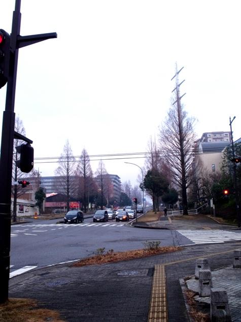画像ー281 昭和の杜 147-2