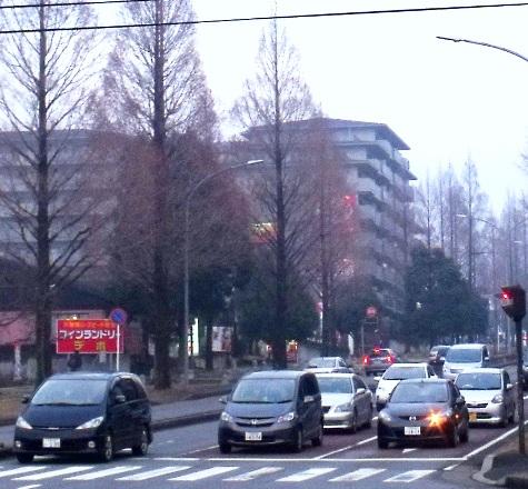 画像ー281 昭和の杜 147-3