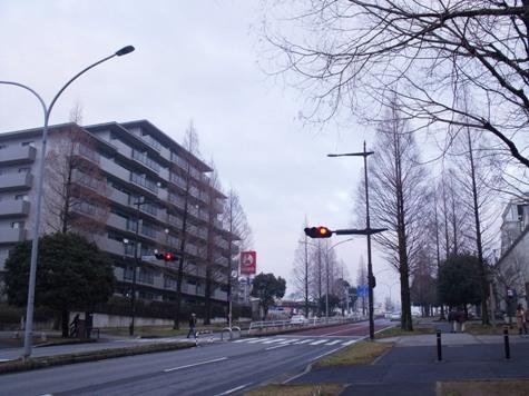 画像ー281 昭和の杜 149-2