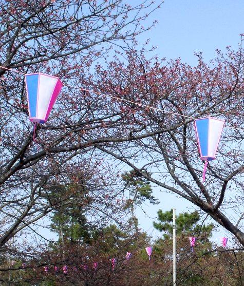画像ー282 サンライズ九十九里の雛人形としらこ桜 110-3