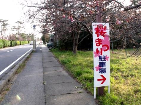 画像ー282 サンライズ九十九里の雛人形としらこ桜 161-2