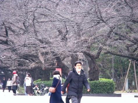 画像ー284 武藤豊先生・書道展2015年3月 005-2