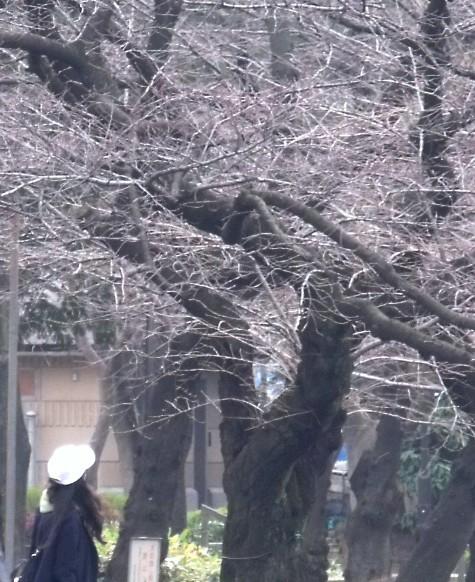 画像ー284 武藤豊先生・書道展2015年3月 006-3