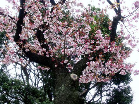画像ー284 武藤豊先生・書道展2015年3月 009-2