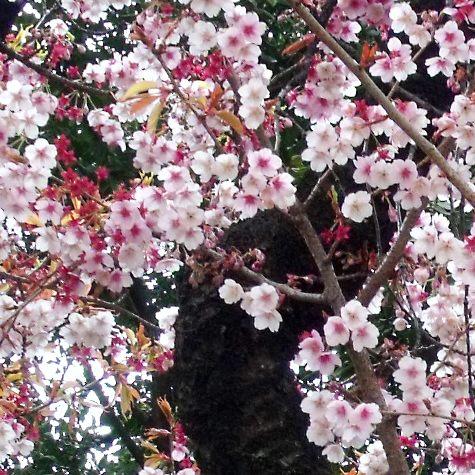 画像ー284 武藤豊先生・書道展2015年3月 009-3