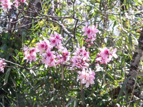 画像ー292 春の息吹2015 007-2