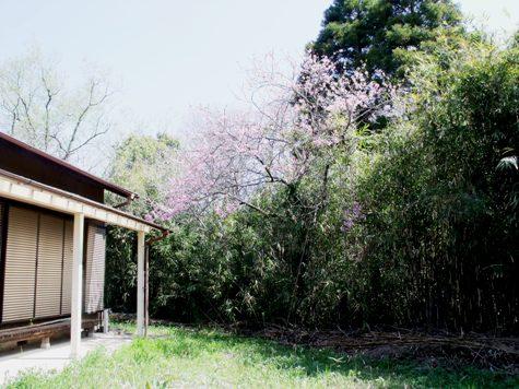 画像ー292 春の息吹2015 001-2