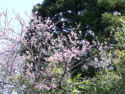 画像ー292 春の息吹2015 002-2